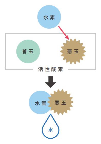 水素と悪玉活性酸素が結びついて水になります。